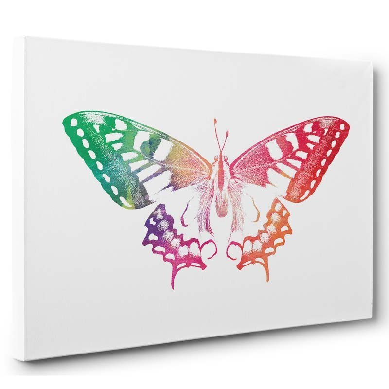 Stampa artistica Butterfly Color